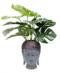 Paras Magic Buddha Face Planter (6.5x6x10 inch)